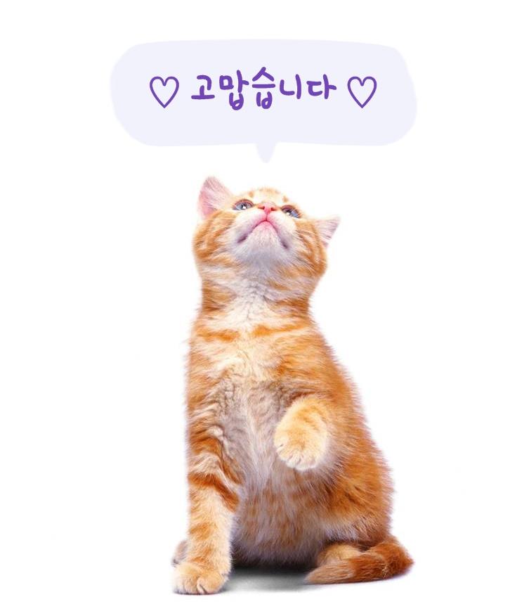 고양이.jpg